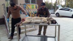 Yaralı köpeğe ilk müdahaleyi Belediye yaptı