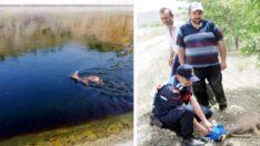 Sulama kanalına düşen karacayı jandarma kurtardı