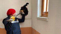 Apartman boşluğuna düşen kediyi itfaiye kurtardı