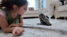 Doğada bulunan yavru puhu koruma altına alındı