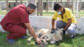 Annesi ölen yavru köpeklere belediye sahip çıktı